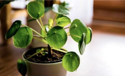 3 Rekomendasi Tanaman Hias untuk Berkebun